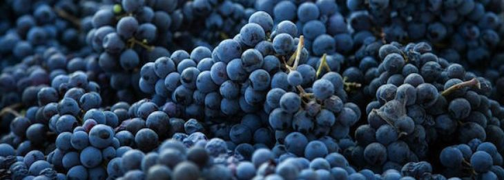 cropped-harvested-grapes.jpg